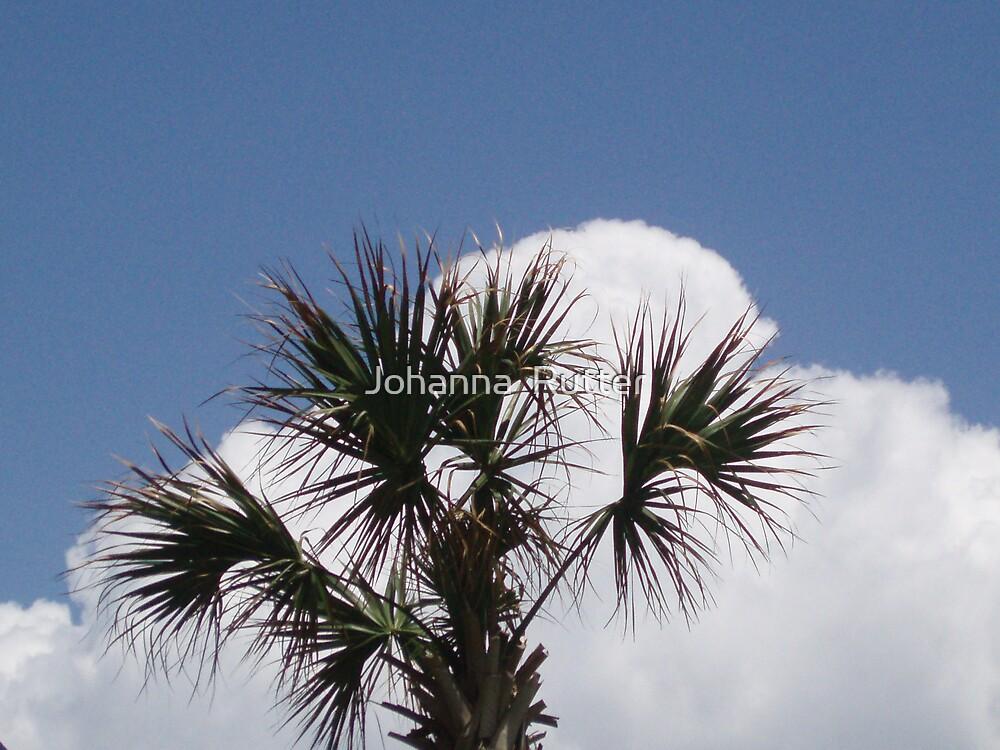 Palm Tree Myrtle beach by Johanna  Rutter