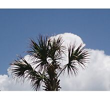 Palm Tree Myrtle beach Photographic Print