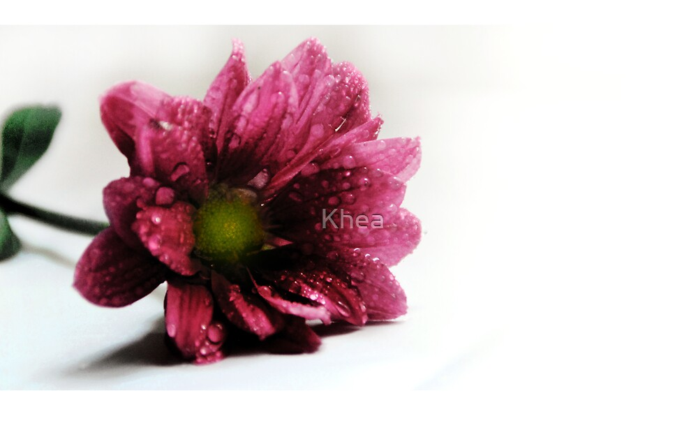 Pink Daisy by Khea