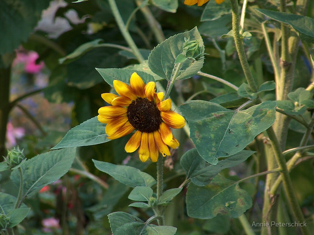 Sunflower by Annie Peterschick