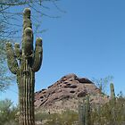 Arizona Desert by dbvirago