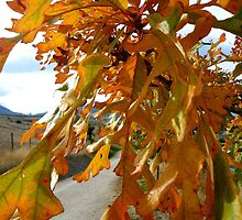 Autumn leaves by vernonite