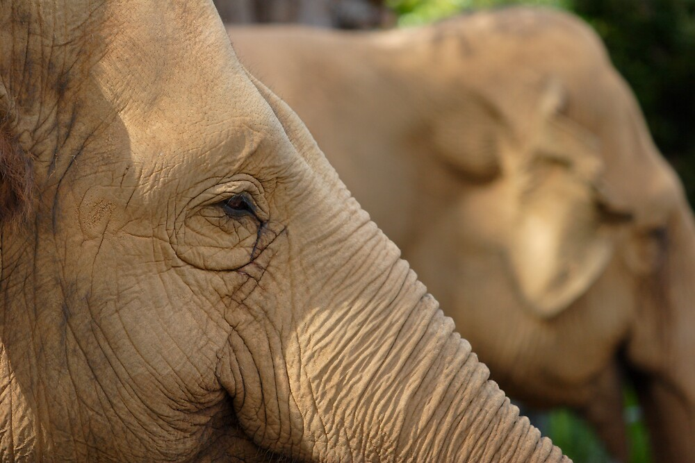 Profile of an Elephant by DionM