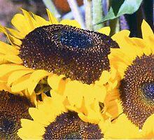 Sunflower&Dew by frosty1