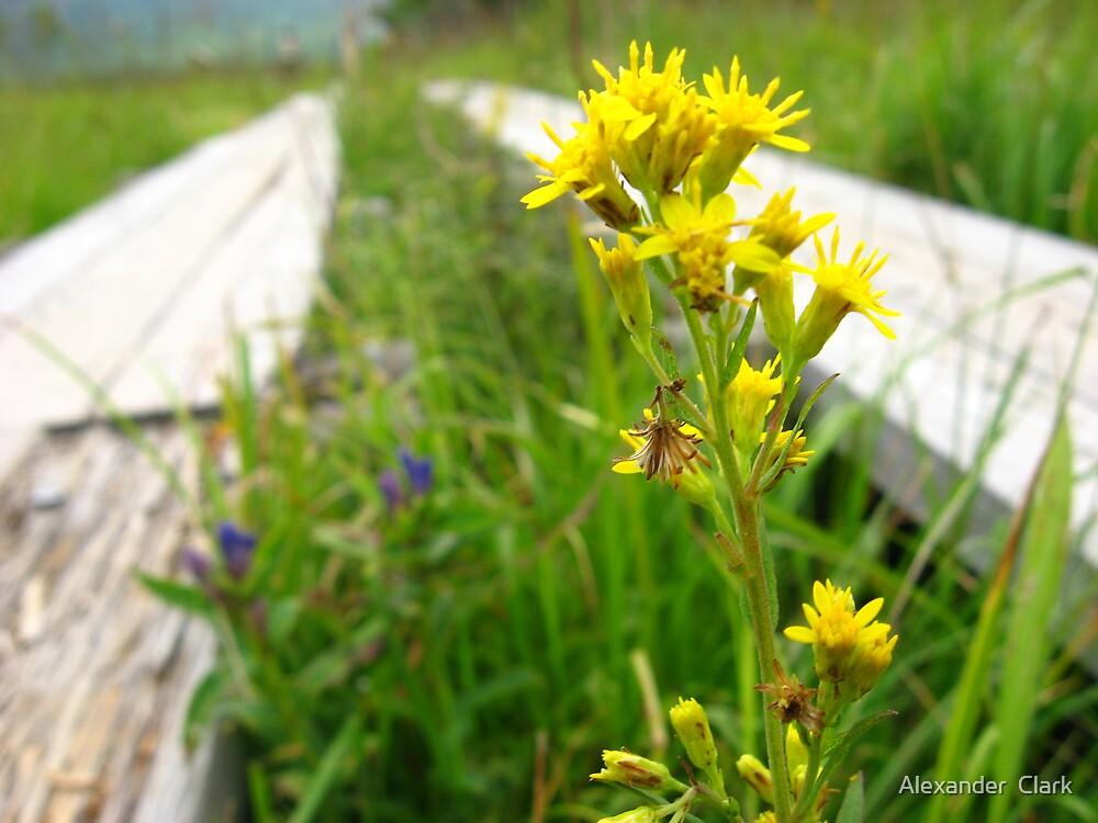 Yellow Flower by Alexander  Clark