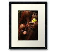 Feeding Time at the Zoo Framed Print
