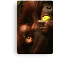Feeding Time at the Zoo Canvas Print