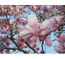 magnolia Photographic Print