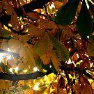 Sun Rays by vernonite
