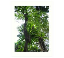Rainforest QLD Art Print
