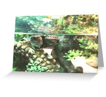 Aquatic Turtle Greeting Card