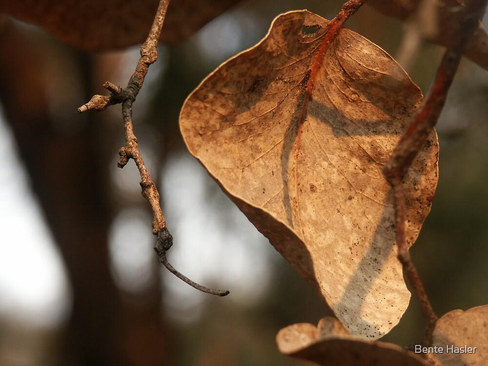 smokey leaf by Bente Hasler