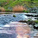 """""""The Spillway"""" by Phil Thomson IPA"""