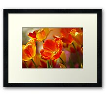 Glowing Tulips Framed Print