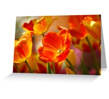 Glowing Tulips Greeting Card