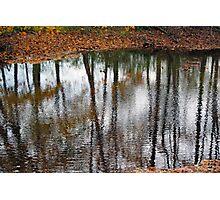 Wet Trees Photographic Print