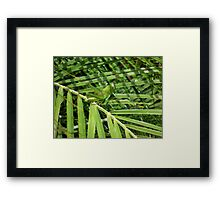 grass hopper  Framed Print