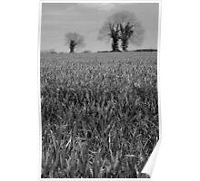 Spring Crop Poster