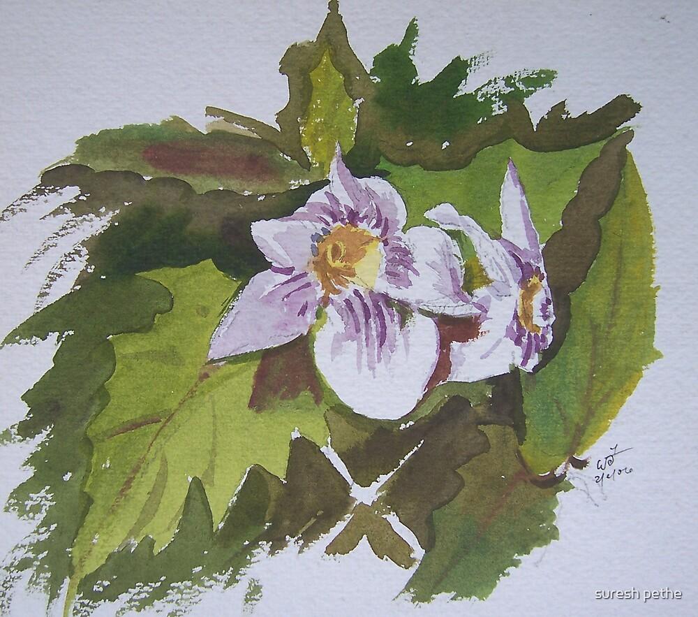 flower by suresh pethe