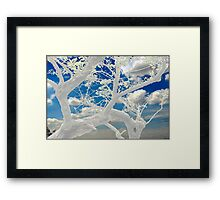 Bleached limbs. Framed Print