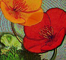 Californian Poppies B2 by ©   Elaine van Dyk