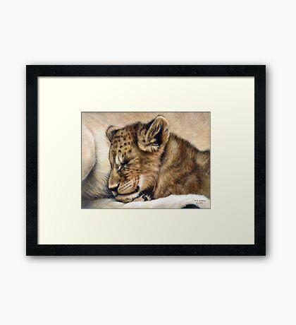 Lion cub on mum's tum Framed Print