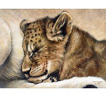 Lion cub on mum's tum Photographic Print