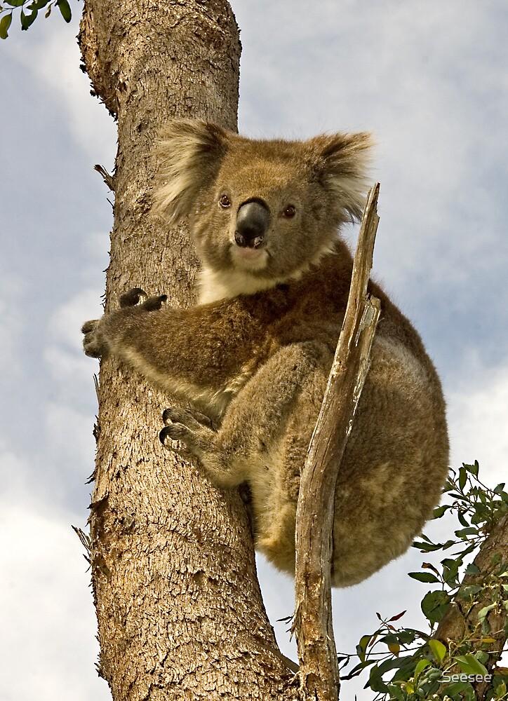 Australiana by Seesee