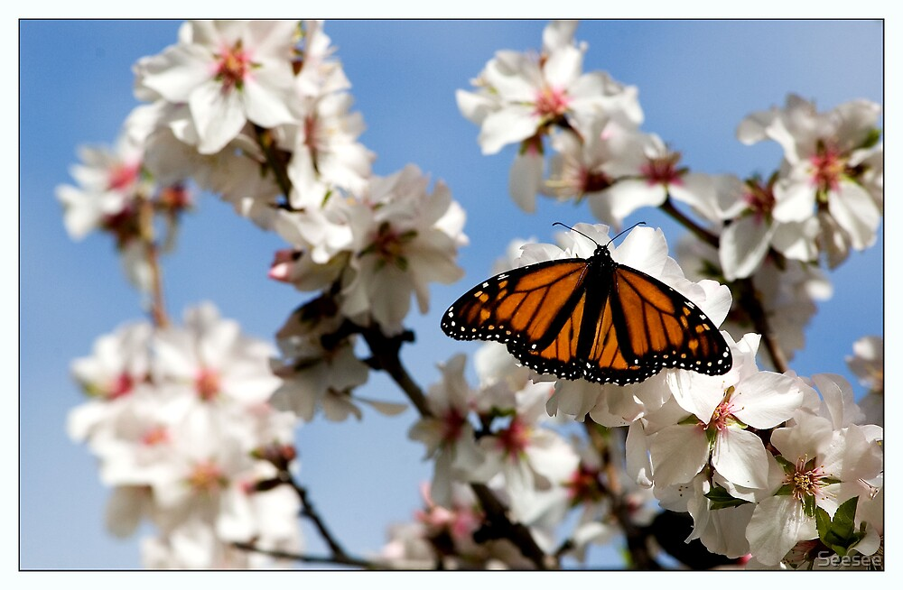 Butterflies on Blossoms 3 by Seesee