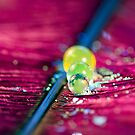 Water balls on feather by Amanda Roberts