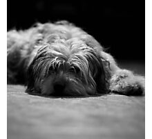 Tired pup Photographic Print