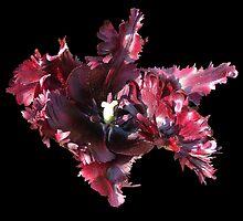 Full Blown 1 by Chris Quinlan