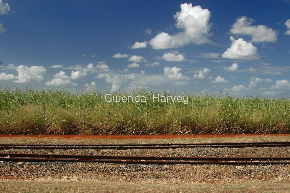 Sagur cane fields8645 by Gwenda  Harvey