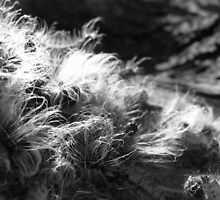 Caterpillars Fuzz by mwfoster