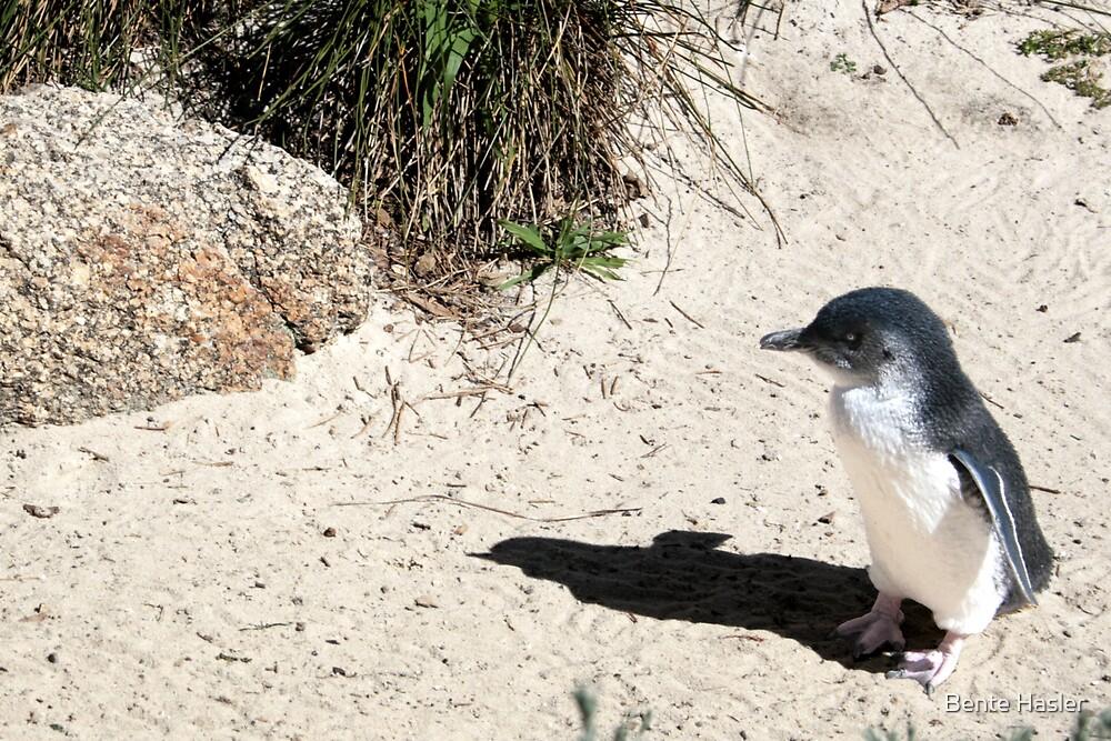 little penguin by Bente Hasler