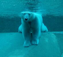 Polar Bear by Richard Peden