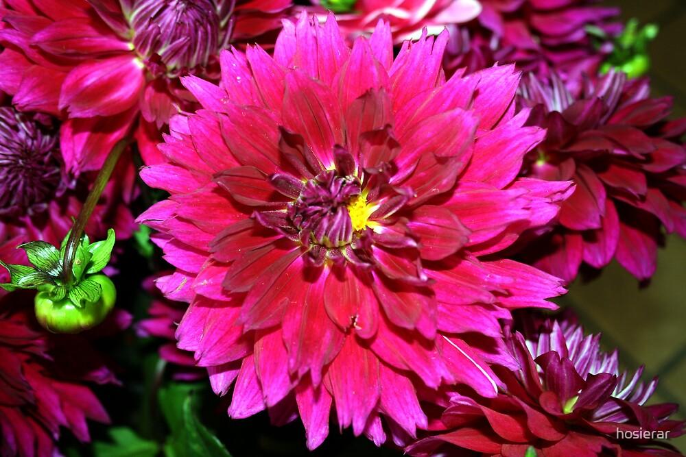Pretty in Purple by hosierar