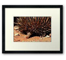 Spiny Anteater Framed Print