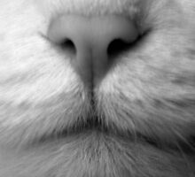 The Nose that Knows by Erica Corr