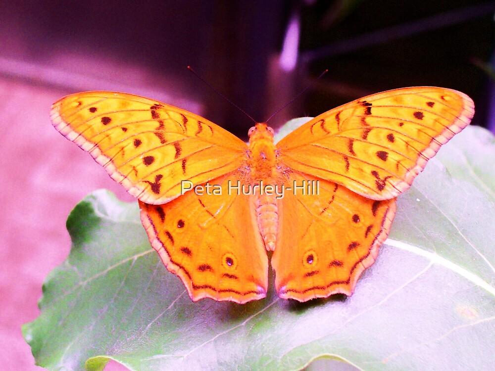 butterfly by Peta Hurley-Hill