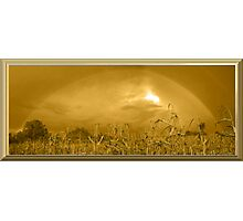 Somewhere In a Cornfield It`s Amber Photographic Print