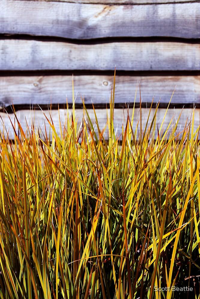 Grass by Scott Beattie