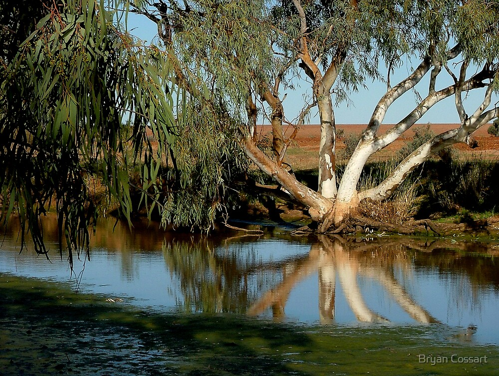 Desert billabong by Bryan Cossart