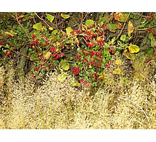 Red Bubbles! Photographic Print