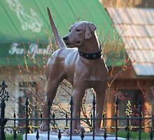 The McCoy Memorial Library Dog by AnnDixon