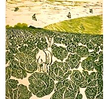 Cabbage Field Hare Photographic Print