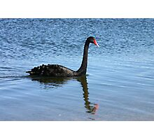 A black swan and a reflection. Photographic Print