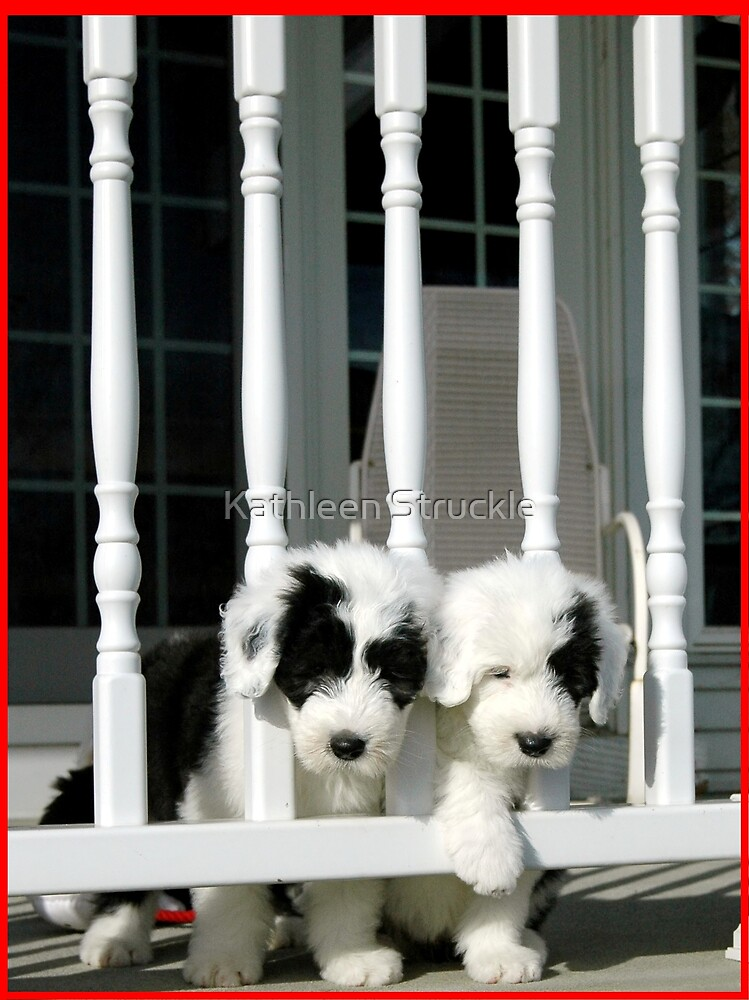 Two Puppies by Kathleen Struckle