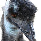 Emu by Cherax