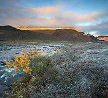 The Last Morning of Fall by Anders Naesset